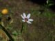 庭の花-6月
