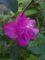 庭の花-7月