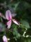 庭の花-9月